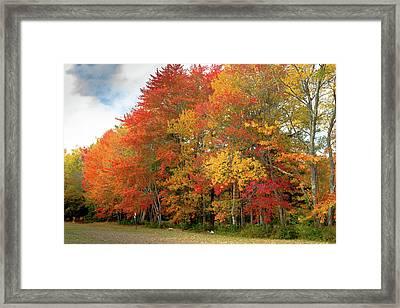 Fall Colors Framed Print