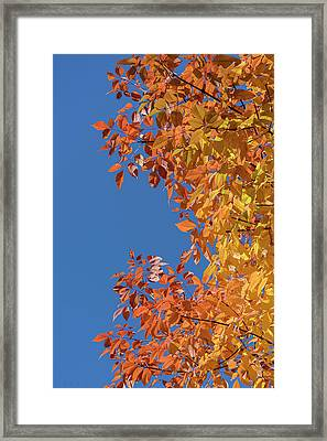 Framed Print featuring the photograph Fall Colors by Steven Sparks