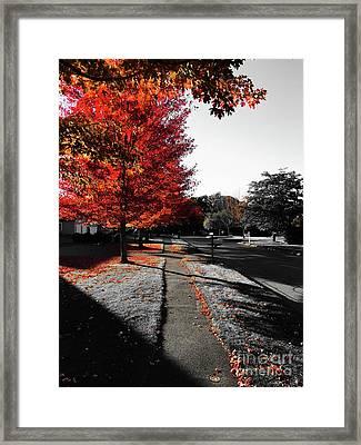 Fiery Fall Trees, Part 1 Framed Print by JMerrickMedia