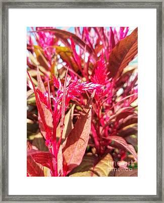 Framed Print featuring the photograph Fall Floral Bouquet  by Rachel Hannah