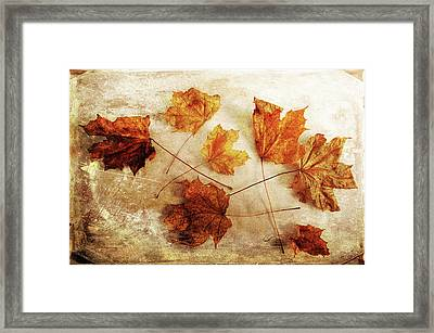 Framed Print featuring the photograph Fall Keepers by Randi Grace Nilsberg