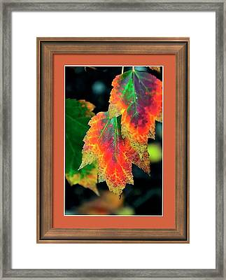 Framed Print featuring the photograph Fall Leaves 6072 Framed by Jerry Sodorff