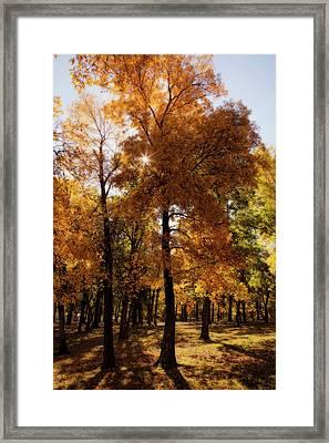 Framed Print featuring the photograph Fall Sunshine by Scott Bean