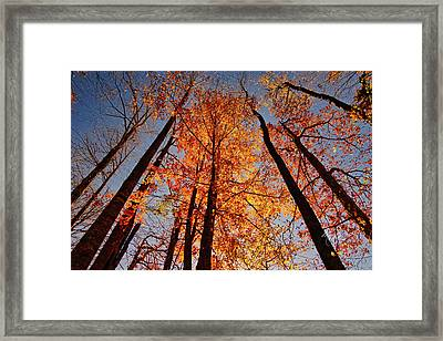 Fall Trees Sky Framed Print