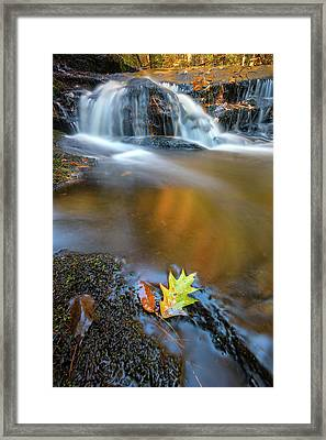 Framed Print featuring the photograph Fallen Oak Leaf In Vaughan Woods by Rick Berk