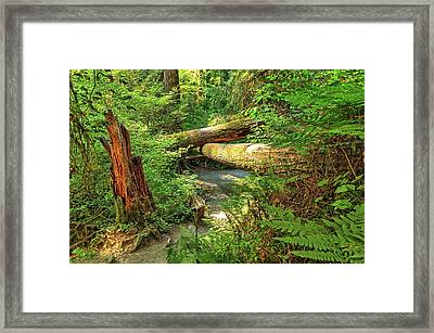 Fallen Trees In The Hoh Rain Forest Framed Print