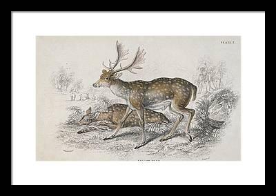 1850 Digital Art Framed Prints