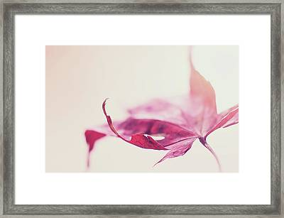 Framed Print featuring the photograph Fancy Flight by Michelle Wermuth