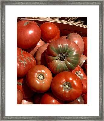 Farm-grown Tomatoes In New Paltz, N.y Framed Print