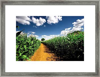 Farm Track Framed Print by Duncan1890