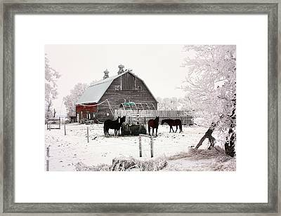 Feed Framed Print