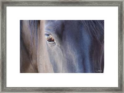 Fenced Foal Framed Print