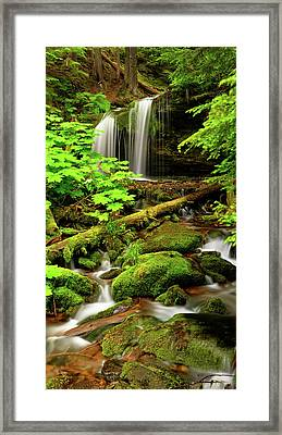 Fern Falls Panoramic Framed Print