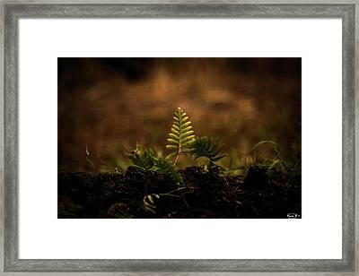 Fern Of Life Framed Print