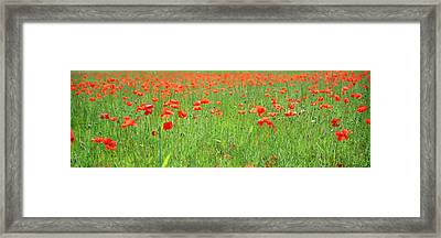 Field Poppy Framed Art Prints