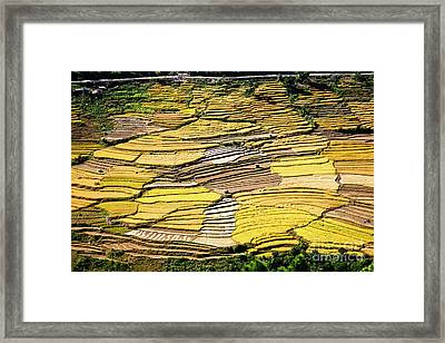 Framed Print featuring the photograph Fields Of Rice by Scott Kemper