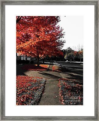 Fiery Fall Trees, Part 2 Framed Print by JMerrickMedia