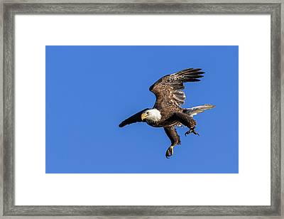 Framed Print featuring the photograph Final Approach by Lori Coleman