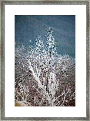 Fingers Of Hoarfrost Framed Print