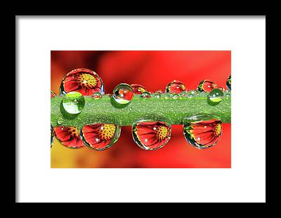 Drops Of Water Framed Prints