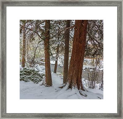 First Snow Framed Print