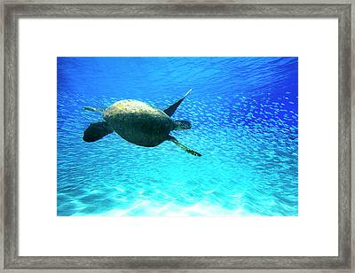 Fish Swoop Framed Print
