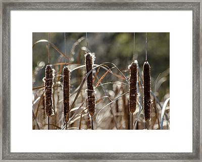 Framed Print featuring the photograph Five Cattails by Rob Huntley