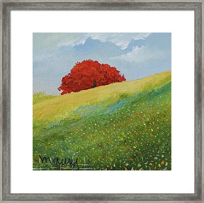 Flamboyant Up To The Hill Framed Print