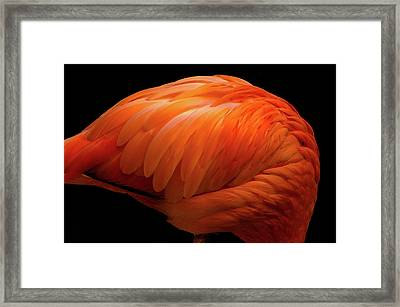 Flamingo Vermilion Framed Print by Akihiro Takemasa