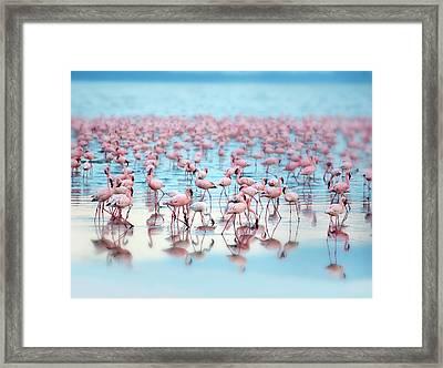 Flamingoes Framed Print by Grant Faint