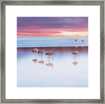 Flamingoes In Bolivia Framed Print by Ingram Publishing
