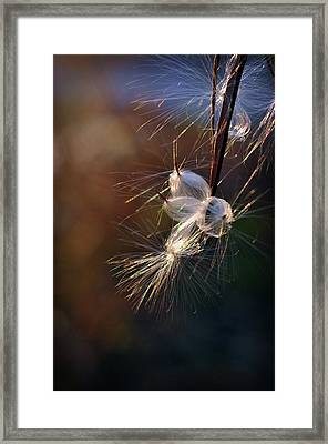 Framed Print featuring the photograph Flight by Michelle Wermuth