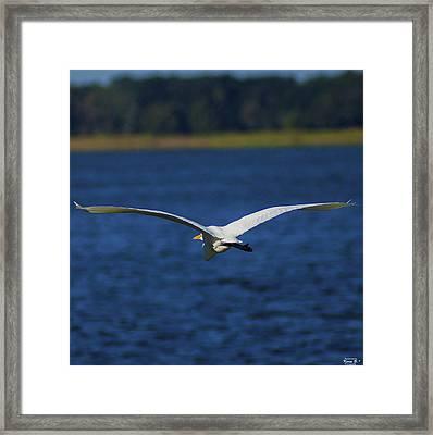 Flight Of The Egret Framed Print