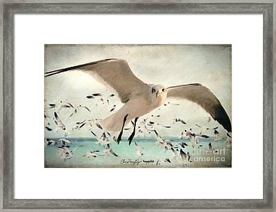 Flight Of The Gulls Framed Print
