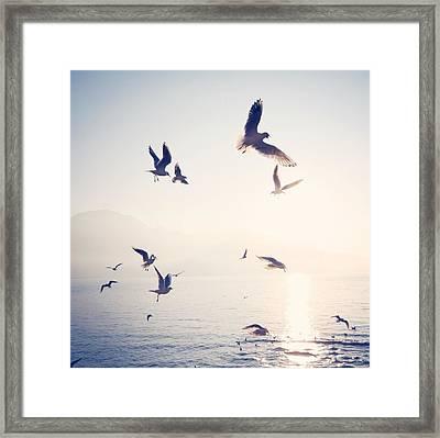 Flock Of Birds Flying Over Sea On Sunny Framed Print by Toni Barth / Eyeem