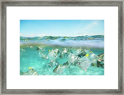 Flock Of Fish Under And Above Water Framed Print by Danilovi