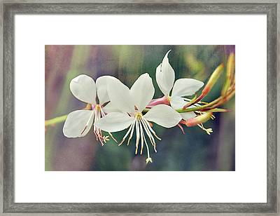 Framed Print featuring the photograph Floral Palette II by Leda Robertson