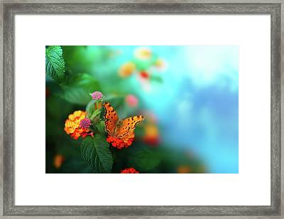 Flower Background With Butterfly Framed Print by O-che