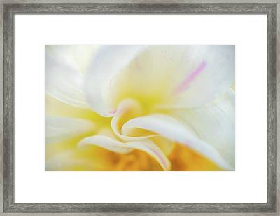 Framed Print featuring the photograph Flower Curves by Francisco Gomez