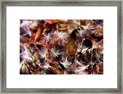 Flower Seeds-1 Framed Print