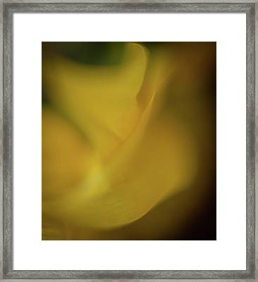 Framed Print featuring the photograph Flower Shades by Francisco Gomez