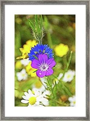 Flowers In The Meadow. Framed Print