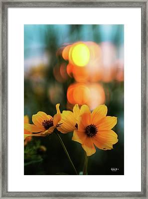 Flowery Bokeh Sunset Framed Print