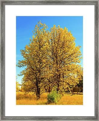 Foliage Framed Print