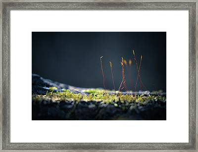 Framed Print featuring the photograph Follow by Michelle Wermuth