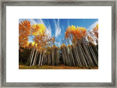 Follow The Yellow Leaf Road Framed Print
