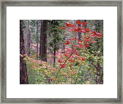 Forest Autumn Framed Print by Leland D Howard