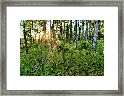Forest Growth Alaska Framed Print