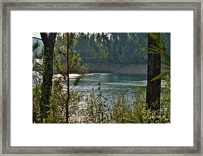 Forest Lake In Amendoa Framed Print