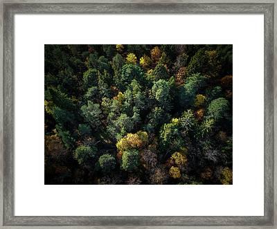 Forest Landscape - Aerial Photography Framed Print